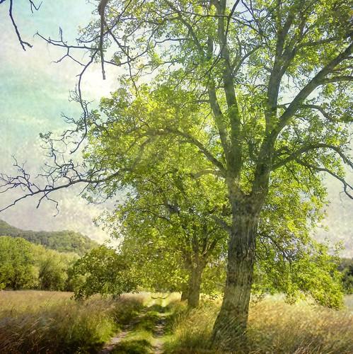 [フリー画像] 自然・風景, 樹木, 草原, 道, 201107111300