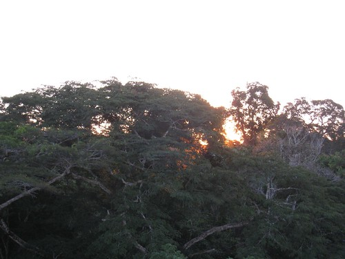 Canopy Sunset, Peru