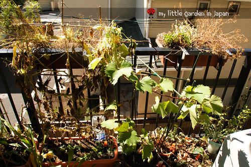 my-little-garden-in-japan-september-2011-4