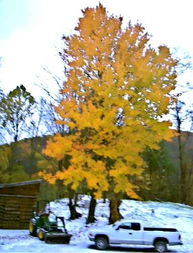 Little Horse Creek Autumn-snow