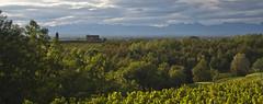 Colli Orientali del Friuli (candido33) Tags: vigne colline friuli viti friulano vigneti povoletto roccabernarda vitigni refosco cornodirosazzo ipaesaggidelvino picolit ramandolo colliorientalidelfriuli