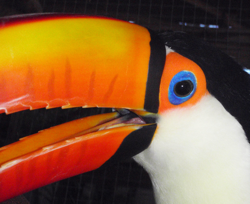 the world s best photos of pet and toucan flickr hive mind