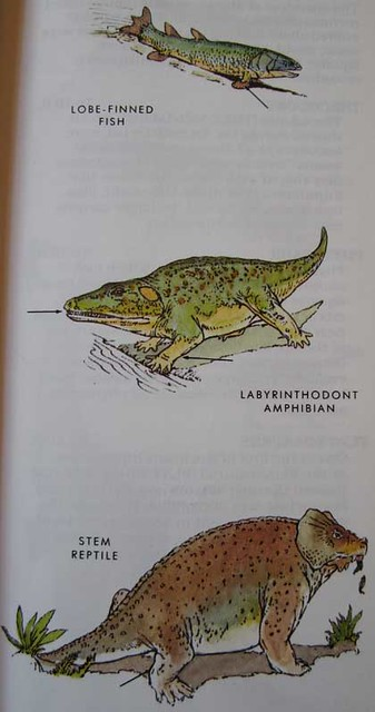 Peterson First Guides: Dinosaurs p. 25