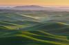 Palouse Morning Haze (Ryan McGinty) Tags: sunrise washington haze wheat farmland agriculture rollinghills palouse whitmancounty ryanmcginty ostrellina