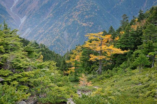 20111019-_DSC1381minami-alps-forest