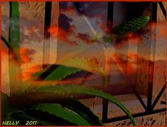 *SUNSET... (MONKEY50) Tags: sunset sky pentaxart natures leaf green fantasy colours cloud clouds color colors colour brown cactus black autumn plant digital orange paintshoppro macro art surrealism skytheme skyascanvas landscape justclouds awardtree hypothetical flickraward