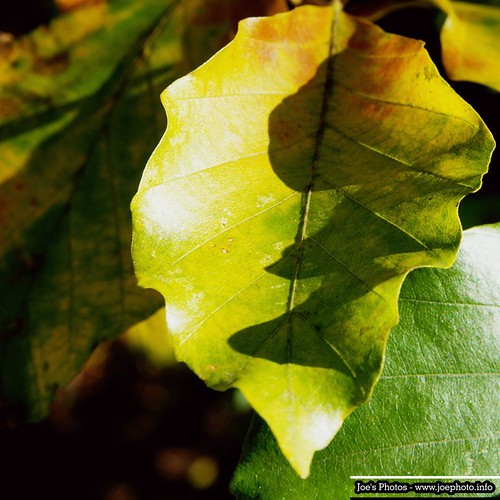 Leaves by Joachim Ziebs