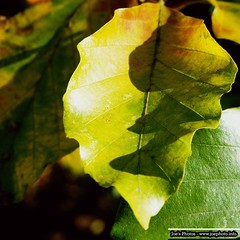 "Leaves • <a style=""font-size:0.8em;"" href=""http://www.flickr.com/photos/62284930@N02/6269290028/"" target=""_blank"">View on Flickr</a>"