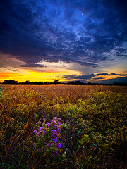 A Return to Bonnie's Meadow (Phil~Koch) Tags: morning flowers blue autumn sunset red portrait orange sun green fall love floral field leaves yellow vertical wisconsin clouds sunrise photography landscapes office spring twilight peace purple earth farm natur scenic meadow inspired naturallight farmland serene agriculture inspirational horizons atumn environement photocontesttnc11 philkoch myhorizonart