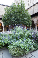 The Medieval Garden at The Cloisters, New York City (jackie weisberg) Tags: nyc newyorkcity flowers plants usa newyork building art museum architecture buildings garden european manhattan columns culture arches exhibit medieval upperwestside newyorkstate slate museums northeast metropolitanmuseumofart washingtonheights forttryonpark thecloisters uppermanhattan abbeys medievalgarden medievaleurope jackieweisberg