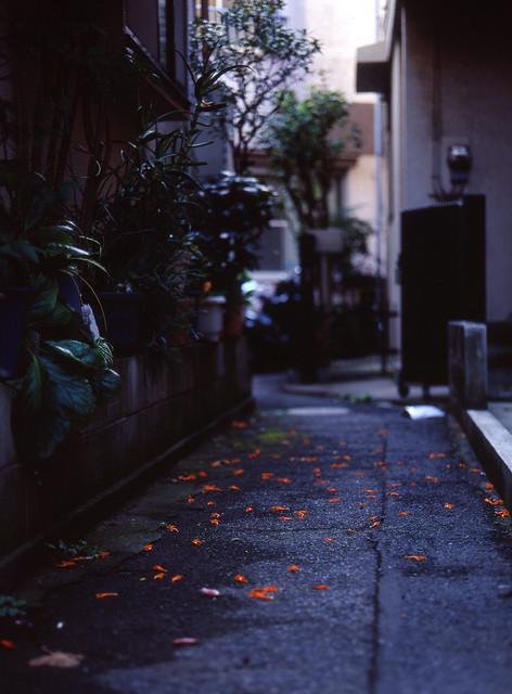 路地の花びら