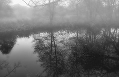 reflections in the fog (mickemike) Tags: morning nature fog creek reflections blackwhite canon1000d