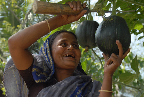 Collecting vegetables, Bangladesh. Photo by WorldFish, 2007