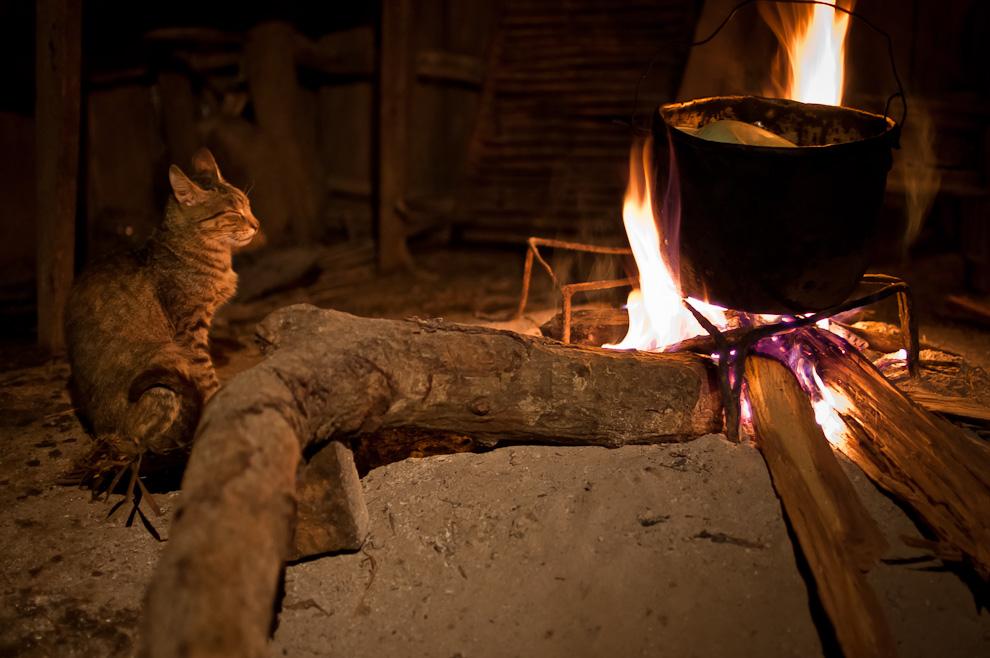 Todos dormimos, una entrega de noviembre del 2011. Un gato dormita frente a una fogata en una precaria cocina de un hogar en el campo, precisamente en las afueras de la ciudad de Caapucú, departamento de Paraguarí, mientras que se estaba cocinando un delicioso arroz blanco. (Elton Núñez)