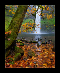 Rain Down On Me (Michael Bollino) Tags: autumn fall nature wet leaves rain oregon outside waterfall maple northwest rainy silverfallsstatepark