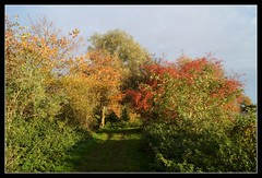 BRILLIANT AUTUMN COLOURS (jdoakey) Tags: uk greatbritain autumn trees light england sky plants brown plant colour detail tree green beautiful grass yellow woodland landscape golden bush pretty day colours gorgeous branches sony great norfolk scenic clear hedge stunning norwich land trunk hanging british marsh bud lovely alpha dslr favourite fen atmospheric oakley clearsky strumpshaw a55 strumpshawfen flickraward flickraward sonya55