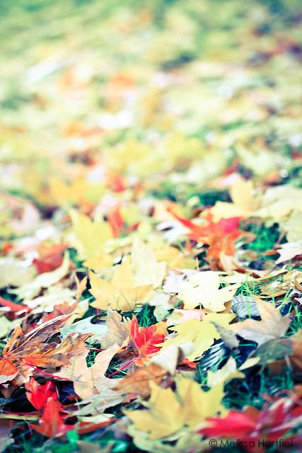 Fall leaves shot from the ground