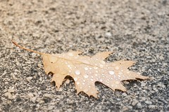 (Squarelle) Tags: autumn art water leaves photography photo leaf drops floor drop nikond3100