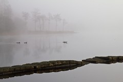 Pier (pampossum) Tags: mist landscape scotland loch trossachs lochard