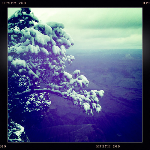 snowy tree at canyon by ceck0face
