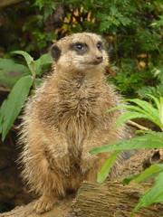 meerkat5