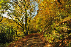 Autumn in Kilminorth Woods at Looe (rosyrosie2009) Tags: uk autumn trees england woodland photography woods cornwall photos hdr gettyimages looe westcountry devonandcornwall d5000 rosiesphotos kilminorth nikond5000 tamronspaf1024mmf3545diiildasphericalif rosiespooner rosyrosie2009 rosemaryspooner rosiespoonerphotography