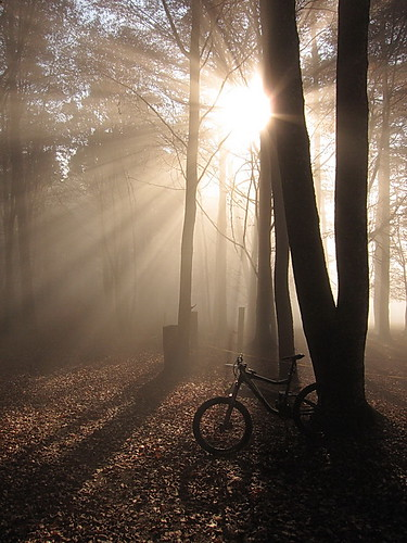 Sun, Fog and Bike