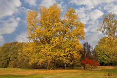I colori dell'autunno / Colors of autumn (Fil.ippo) Tags: park autumn parco milan fall landscape milano north autunno hdr filippo nord d5000