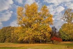 I colori dell'autunno / Colors of autumn (Fil.ippo) Tags: park autumn parco milan fall landscape milano north autunno hdr filippo nord d5000
