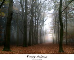 creepy autumn (Zino2009 (bob van den berg)) Tags: november autumn trees fall nature silhouette forest dark grey bomen nebel sinister herbst herfst foggy natuur creepy spooky leafs bos wald frontpage eng deventer mistig 111111 naturesfinest najaar gosts duister zino2009 bobphotography explore1752