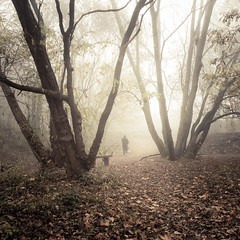 Autumn Fantasy : Misty Sunday (Gilderic Photography) Tags: park autumn trees people dog mist cinema man fall nature leaves misty fog forest automne bench walking square lumix woods europe raw mood belgium belgique belgie walk sunday chartreuse atmosphere panasonic explore story arbres promenade cinematic liege foret parc brouillard banc bois feuilles brume lightroom balade carre 500x500 peville gilderic dmclx3 oblats grivegnee bestcapturesaoi elitegalleryaoi asquaresuperstarstemple