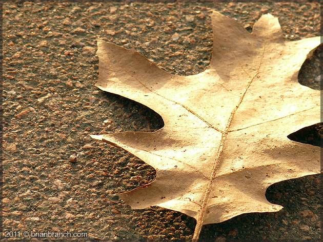 P1190813_golden_leaf