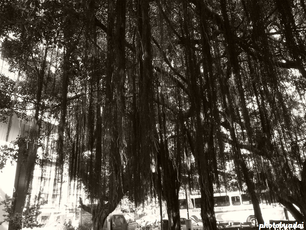 2011.11.13 員林公園_GRD4
