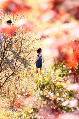... (yukkiee) Tags: autumn orange yellow children maple   gunma      sakurayamapark