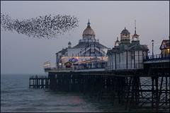 Home to Roost! (adrians_art) Tags: beach birds lights evening coast flight structure shore seawater eastbournepier murmurationofstarlings