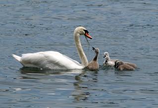 2011.06.16.107 ZURICH - Sur le lac