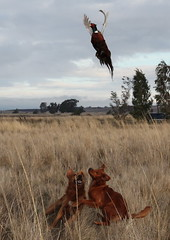 Pheasant Hunt -- Xeon & Arson dancing under a ...