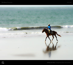 Riding The Waves (tomraven) Tags: africa sea horse beach water sand surf waves riding westafrica canter thegambia tomraven bestcapturesaoi aravenimage q42011 flickrstruereflection1 flickrstruereflection2