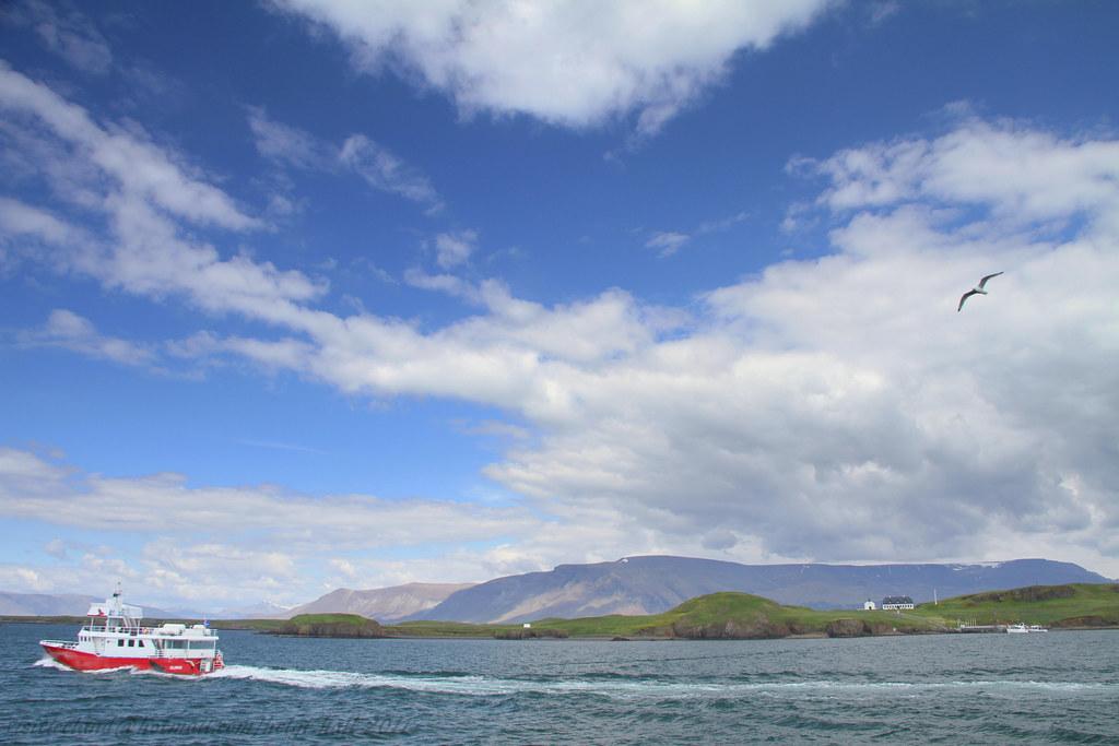 Elding Whale Watching - Reykjavík