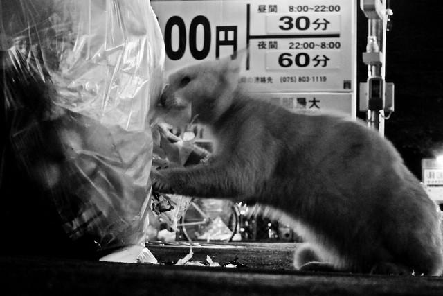 Today's Cat@2011-10-04