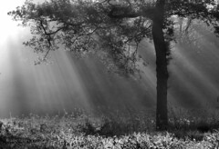 A beautiful morning (joeke pieters) Tags: bw blackwhite zwartwit sunrays sunbeams konicaminoltadimagea2 zonnestralen 5803 platinumheartaward mygearandme mygearandmepremium mygearandmebronze mygearandmesilver mygearandmegold mygearandmeplatinum mygearandmediamond artistoftheyearlevel3 artistoftheyearlevel4 musictomyeyeslevel1
