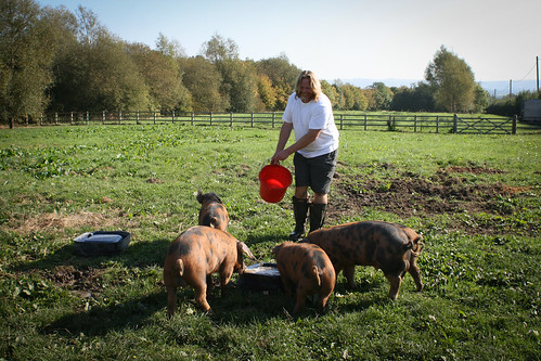 James and happy pigs