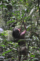 the huaorani society of ecuador The huaorani's a once completely isolated indigenous ethnic group that over the years have begun to be integrated and involved with society by means of eco tourism.