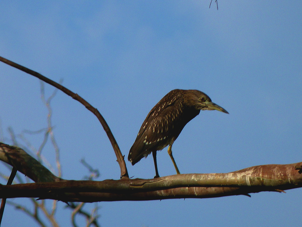01-10-2011-birds-yeah-dets-me