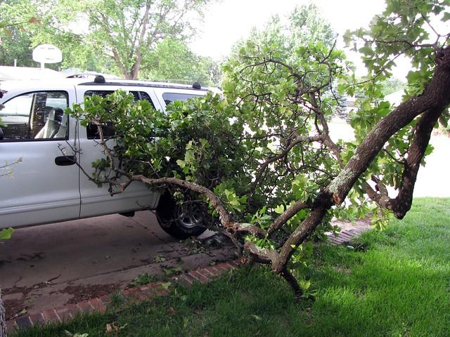 Tree Near Car Two