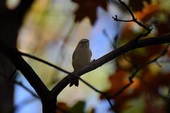 Bird DSC_2995