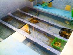 Mariscos vivos