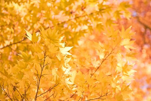 Glimmering golden