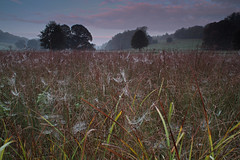 Early morning Spider Web junction (Si Photography) Tags: morning blue autumn trees sky sun mist lake reflection simon water field grass metal misty fog clouds sunrise canon landscape photography spider early interesting track colours slow gorgeous branches web meadow greens dorset shutter 5d rise wiltshire scape bishop depth fonthill gifford detectives hindon 600d 550d maidment kindestsi sphm17aolcom