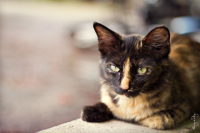 Mr Meow